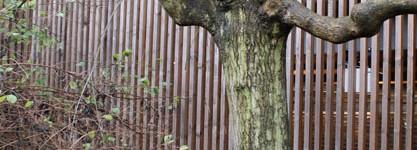 Fasad-med-träd-2-WEB