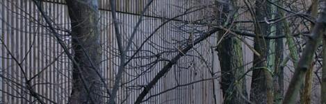 Fasad-med-träd-WEB