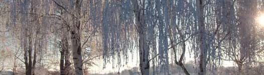 Vinterträd-WEB
